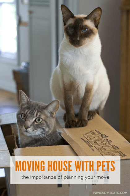 The upheaval associated with moving house can be a stressful experience for cats, being prepared is the key to success. | Moving House With Your Cat - The Importance of Planning