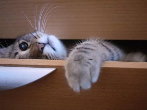 Kitten hiding in drawer