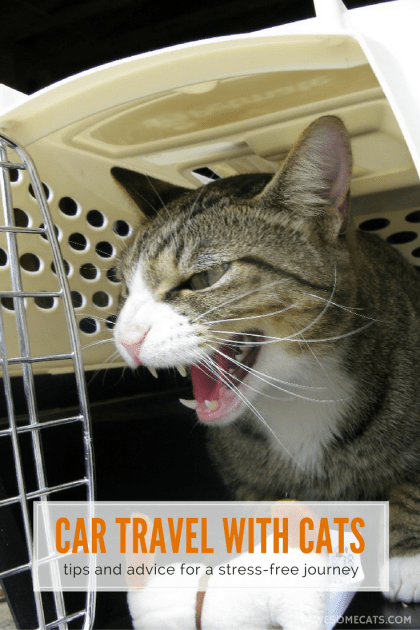 Tips to help make car travel with your cat as safe and comfortable as possible | Car Travel With Cats - Tips & Advice