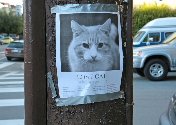 lost cat poster taped to pole on street