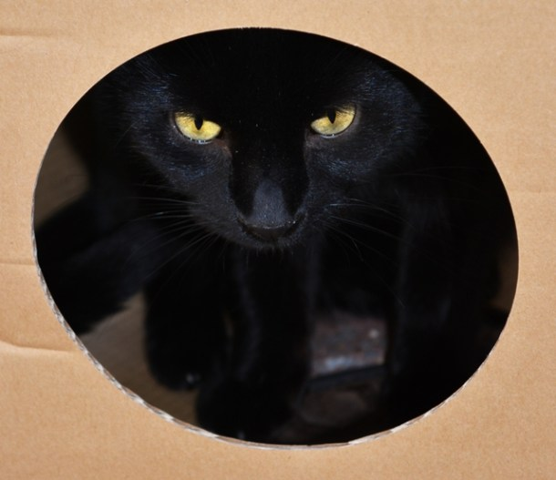 Why Do Cats Love Cardboard Boxes?