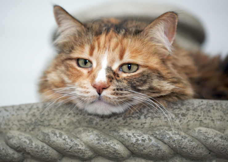 why do cats sleep a lot