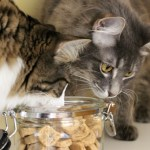 Tuna Heart Cat Treats - Charlie and Max raiding the jar | bake from the heart on Valentines Day