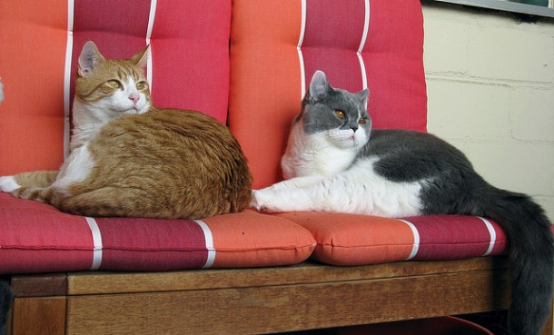 Cats on bench seat