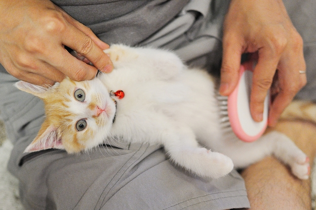 Getting your hair done is very relaxing | Moggy Day Spa: Pampering Your Cat