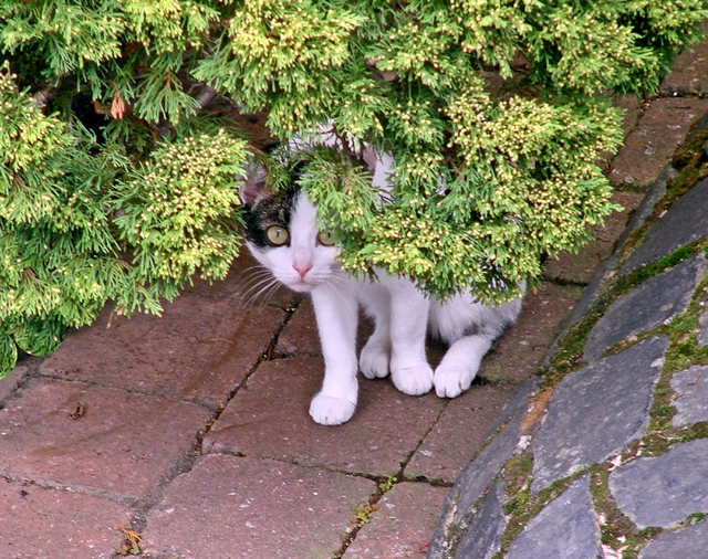 Pet detectives understand cat behaviour and know how to effectively search for missing pets   Missing Cat? Call the Pet Detectives