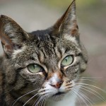 Five reasons to adopt an older cat
