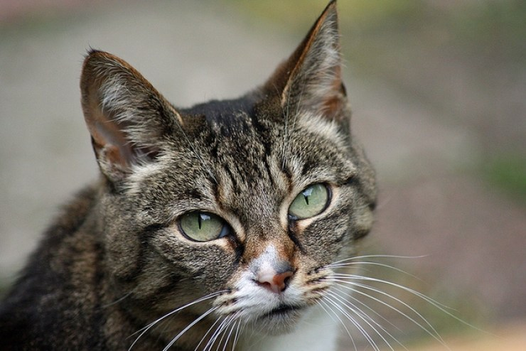 Whilst kittens are cute and adorable - there are advantages to adopting an adult or older cat | Five Reasons to Adopt an Older Cat