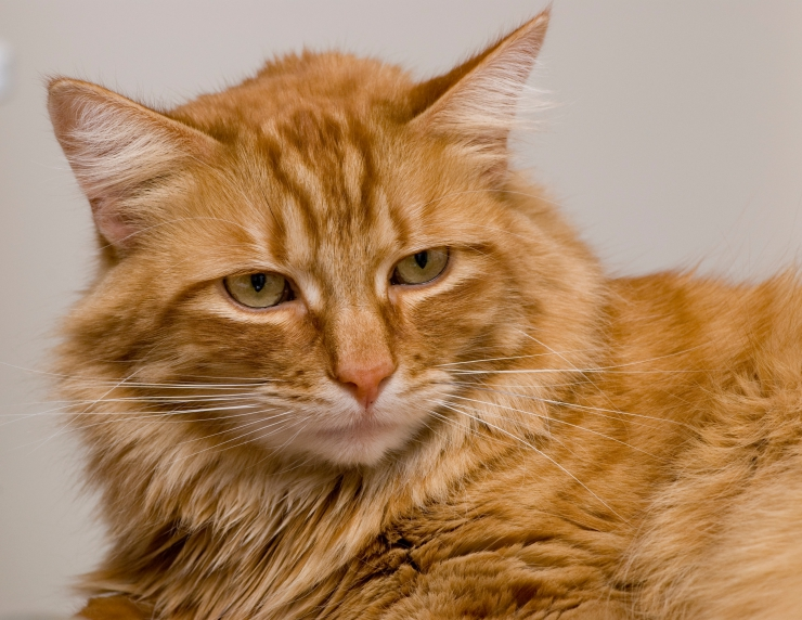 Chronic Kidney Disease in Cats , What You Can Do
