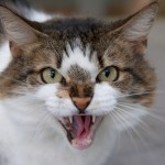 Aggressive Behaviour in Cats