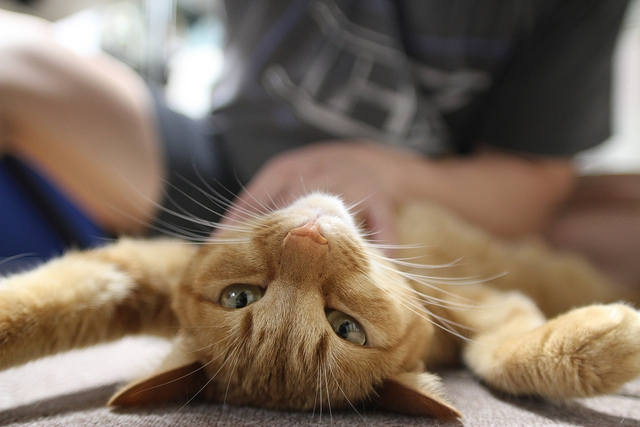 Have you ever considered giving your cat a massage? | How to Give Your Cat a Massage in 8 Easy Steps