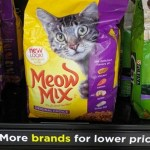 Tips for Feeding Your Cat on a Budget