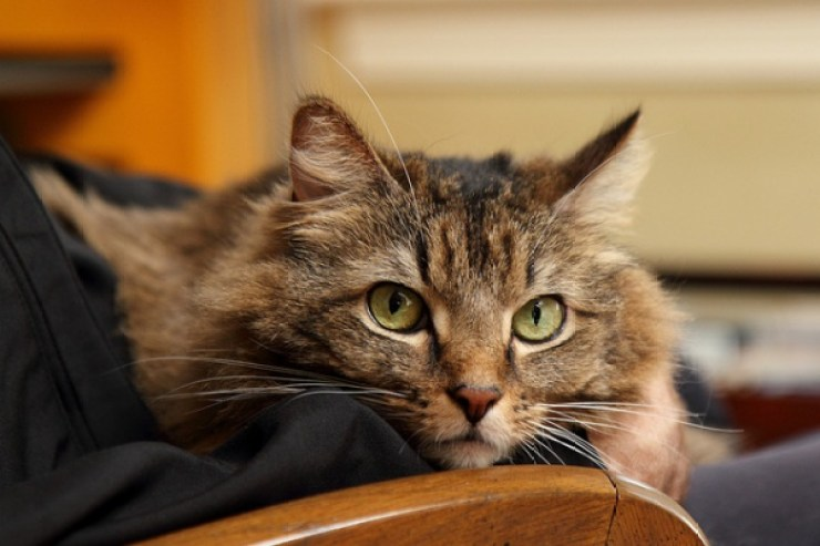 Cat rescue organisations are always looking for compassionate volunteers to provide temporary foster care to cats | You Can Make a Difference by Fostering Cats