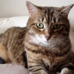 How to Deal With Separation Anxiety in Cats