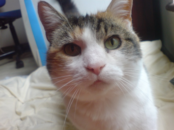 Is it harder to find homes for cats who are FIV+?   Living With an FIV+ Cat