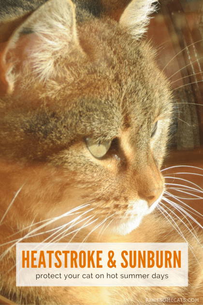 What you need to know about heatstroke and sunburn to ensure your cat enjoys summer safely | Summer Safety for Cats: Heatstroke and Sunburn