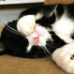 5 Reasons Why Cats are Good for Your Health
