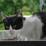 Eating Disorders in Cats – Over Eating and Not Eating Enough