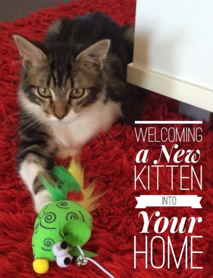 Prepare for the arrival of a new kitten - we discuss basic kitten supplies, the importance of kitten proofing your home, your kitten's first night and how to deal with homesickness, food and nutrition. | Welcoming a New Kitten Into Your Home