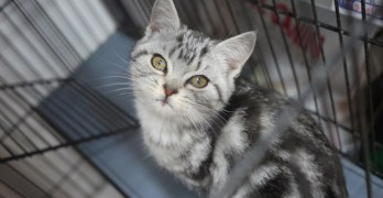 How to Use Social Media Effectively to Help Pets in Need