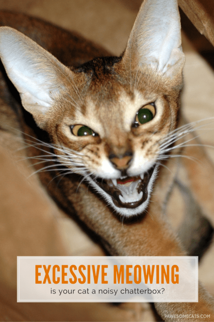 the cat returns full movie english dubbed