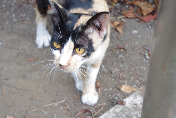 Is it really a stray cat?  Not all pet cats wear collars, and some elderly cats or cats with health issues might look 'scrawny' when they're actually okay   What to do When You Find a Stray Cat