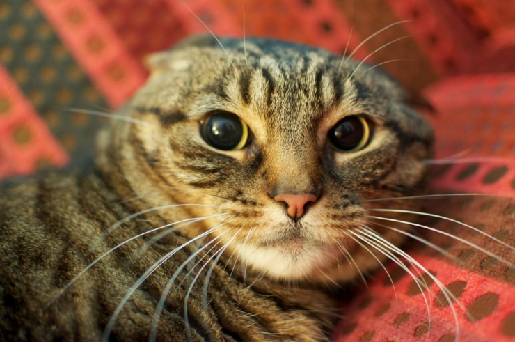 Are you struggling with a cat with behavioural problems and need help? | Does Your Cat Need a Therapist? Seeking Help From a Cat Behaviourist