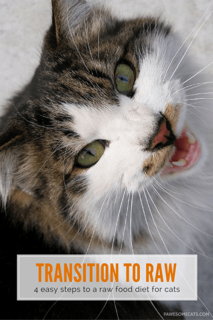Four stages to successfully transition your cat from the 24/7 kibble buffet to raw | How to Transition Your Cat to a Raw Food Diet