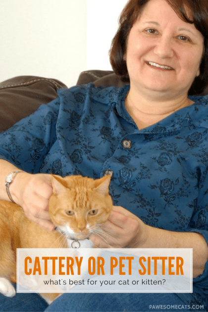 If you're going on holiday, you need to decide whether a cattery or pet sitter is best for your cat. Here are our tips to help you make the right decision | Cattery or Pet Sitter: What's Best for Your Cat?