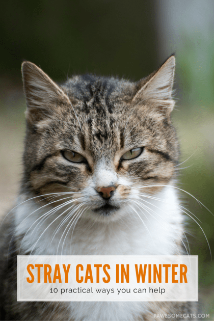 pretty cats breeds