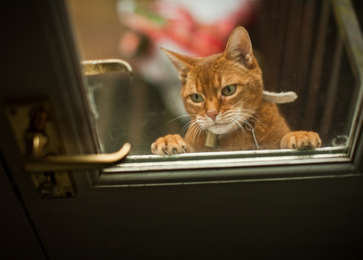 Possessions are replaceable, but pets are priceless!   Are You and Your Cats Prepared for a Natural Disaster?