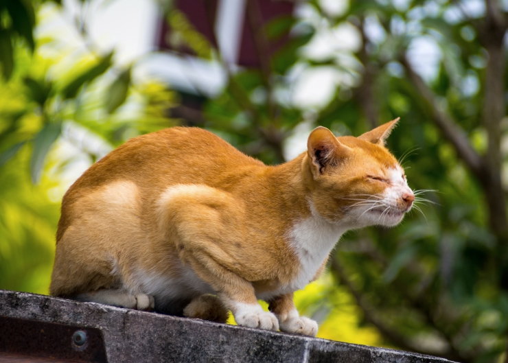 Winter weather places additional stress on feral and stray cats who are already doing it tough, but there are practical ways you can help | 10 Ways to Help Stray Cats This Winter