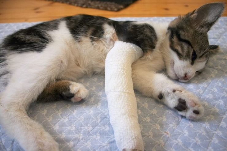 The first rule of pet first aid is to recognise when to act or when to leave well alone and get straight to the vet clinic | Pet First Aid Tips: What to Do in an Emergency