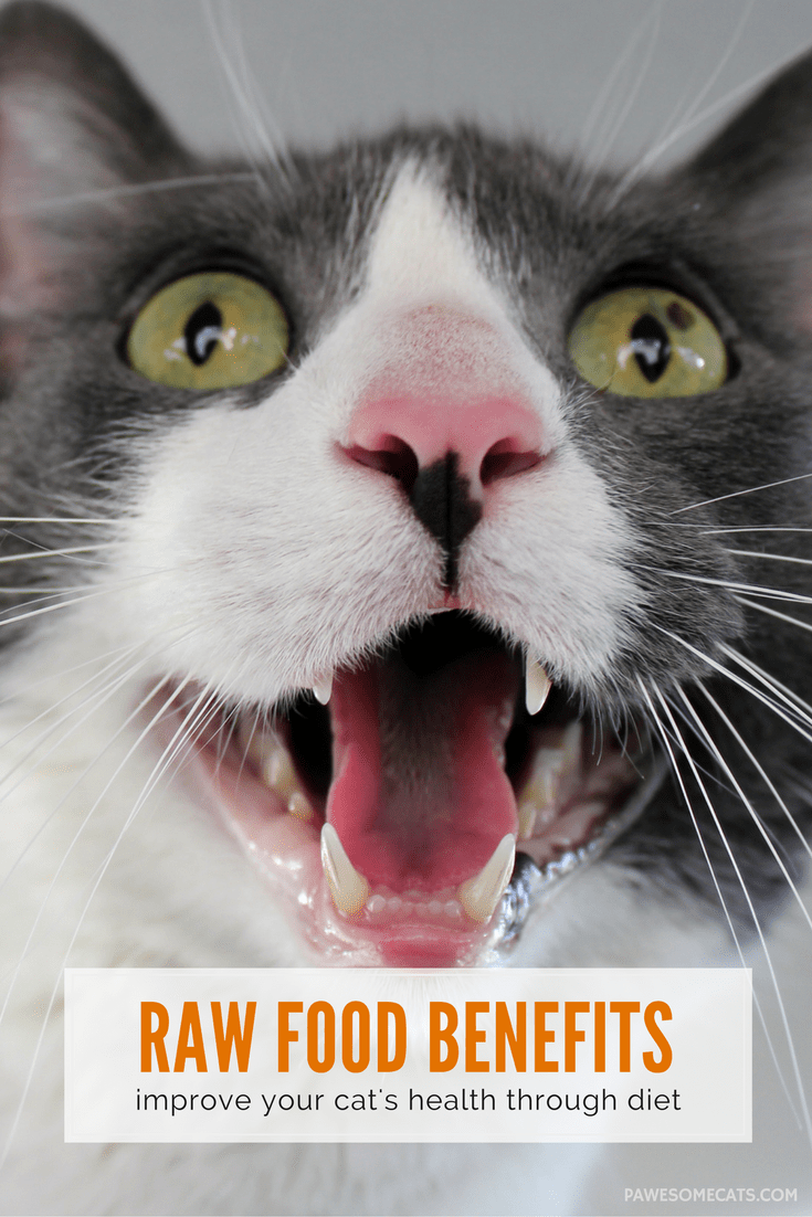 Feeding your cat a raw food diet allows them to eat the way nature intended, it also results in improved digestion, more energy and other benefits | Benefits of a Raw Food Diet for Cats