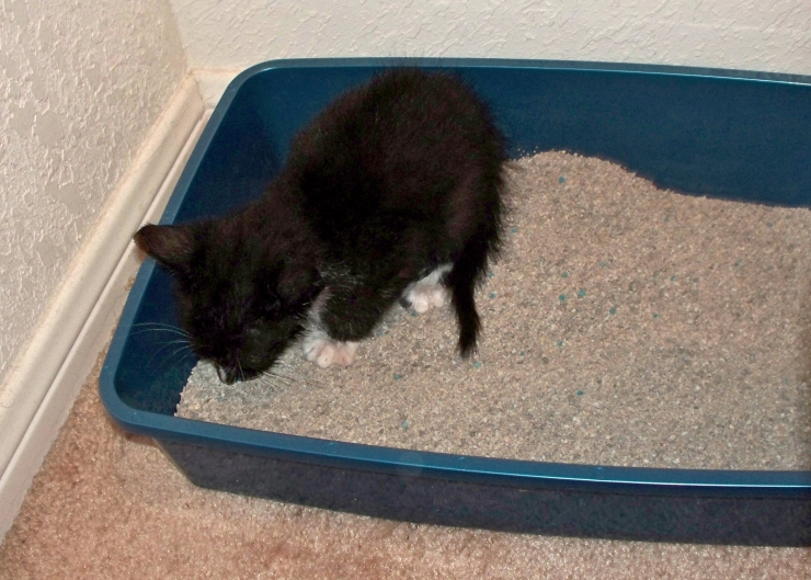 Are you obsessed by the contents of your cat's litter box? We discuss normal cat poop and the signs, causes and treatment for constipation and diarrhoea | Cat Poop 101: Should I Worry About My Cat's Poop?