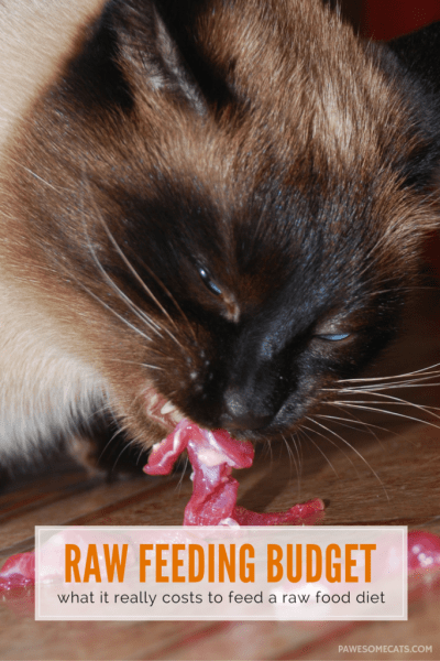 how much it costs to feed cat raw food diet