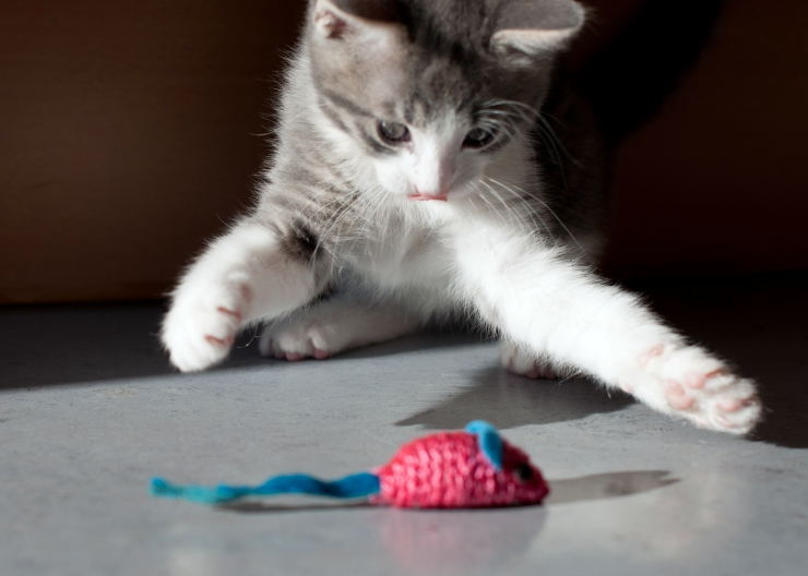 Training kittens can be a challenge - you need to understand how they think to achieve the best results   Top 10 Training Tips for Kittens