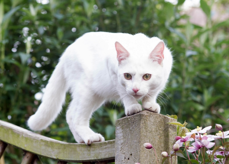The facts of feline cancer - including common cancers, signs, diagnosis, treatment and how to reduce the risk of cancer in cats | Facts About ancer in Cats