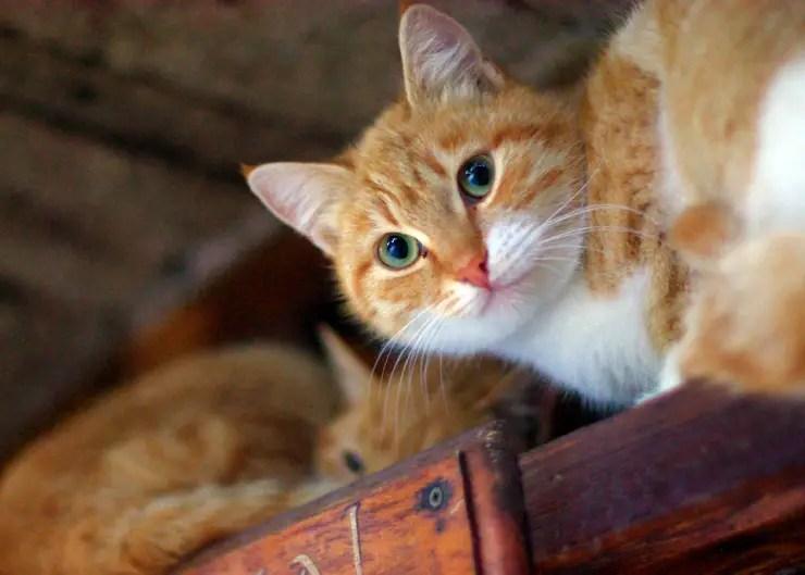 Does your cat dart for the door? To avoid the heart-break of a & How to Stop Door Darting Behaviour in Cats Pezcame.Com