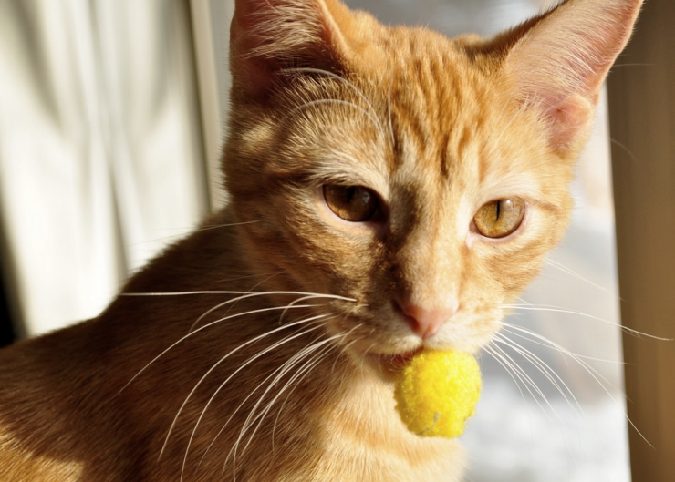Does your cat dart for the door? To avoid the heart-break of a door darting cat getting into trouble, let's look at why cats do it and what to do about it. | How to Stop Door Darting Behaviour in Cats