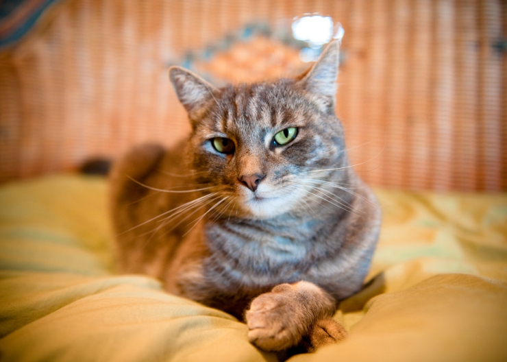 At some point in their life it's likely your cat will become dehydrated, so recognising the symptoms and knowing what to do is important | What to do if Your Cat is Dehydrated