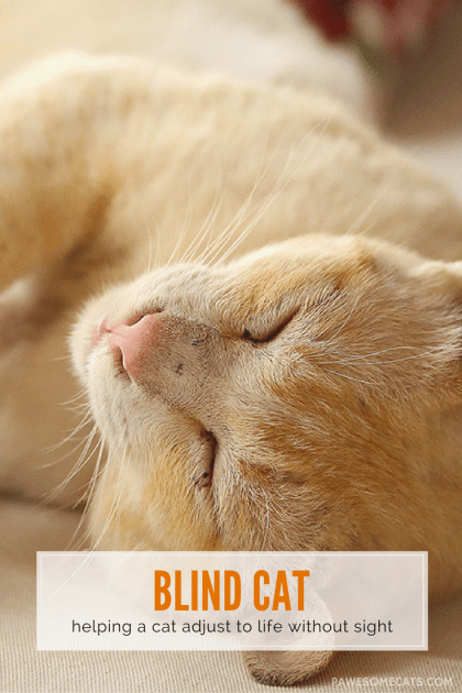 Cats usually adjust well to blindness, because their other senses compensate. We discuss lifestyle adjustments to make your cat's life easier.   How to Help a Blind Cat Adjust to Life Without Sight