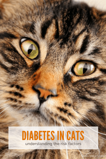Risk factors for feline diabetes and what you can do to prevent and treat this disease. | Diabetes in Cats - What are the Risk Factors?