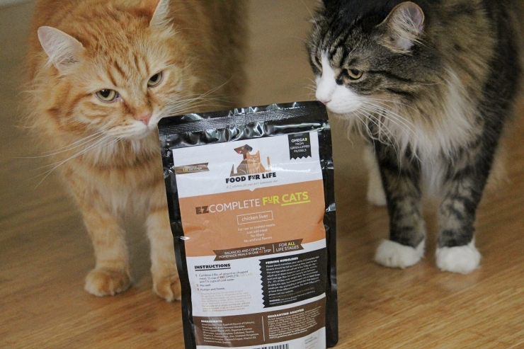 ginger tabby and brown and white tabby cats sniff the EzComplete supplement packet