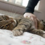 5 Ways to Reduce Stress in Your Cat