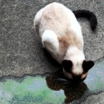 10 Reasons to Keep your Cat Indoors