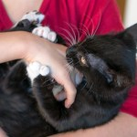 Understanding Cat Scratch Disease