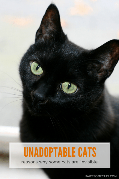 Why Some Cats are Invisible: Adopting the Unadoptable Cats