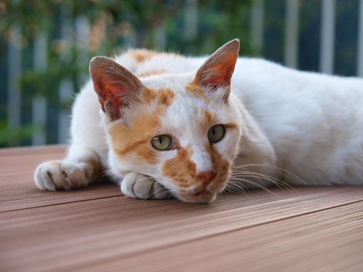 Pet Medicine Safety - we discuss safe purchase of pet medications as well as storage, dosage precautions and how to dispose of meds that are out-of-date or no longer required.