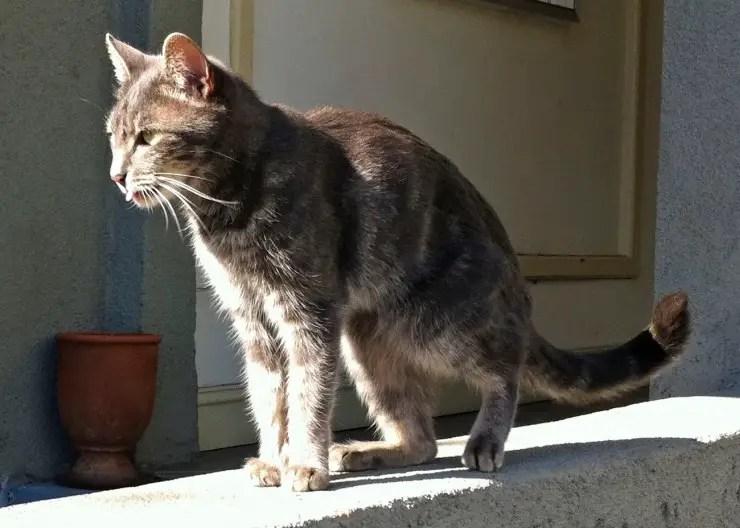 skinny elderly cat